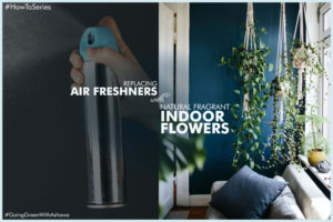 5 INDOOR PLANTS THAT CAN REPLACE ARTIFICIAL AIR-FRESHENER