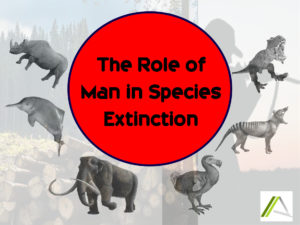 THE ROLE OF MAN IN SPECIES EXTINCTION